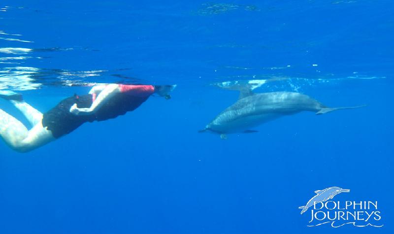 Watkins Dolphin Logo 2