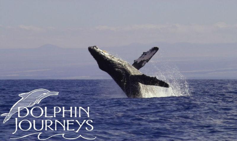 whale2 Rick D logo2 2